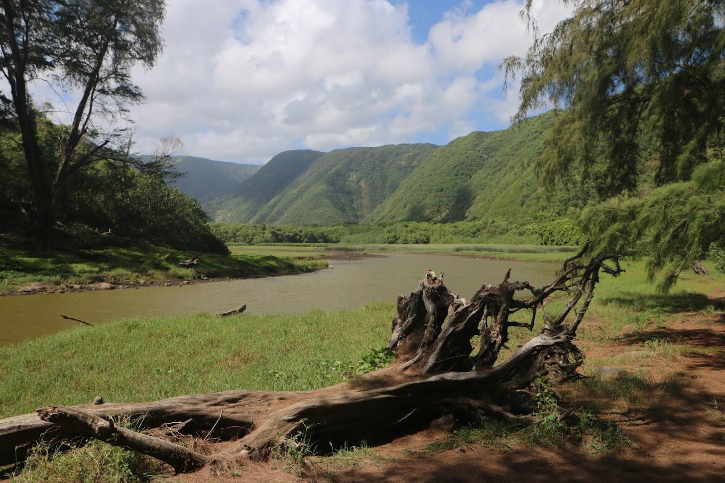 Pololu Valley - dans la vallée