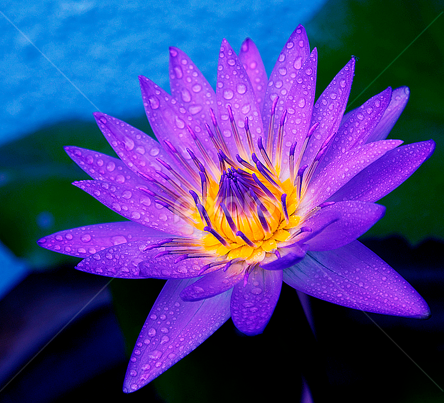 The Most Beautiful Moment by Min Hew - Nature Up Close Flowers - 2011-2013