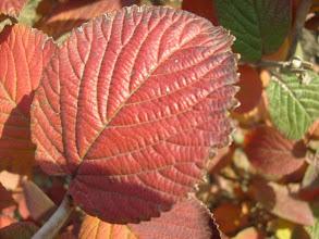 Photo: Színesedő levelek