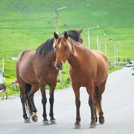 by Franklin Joseph - Animals Horses