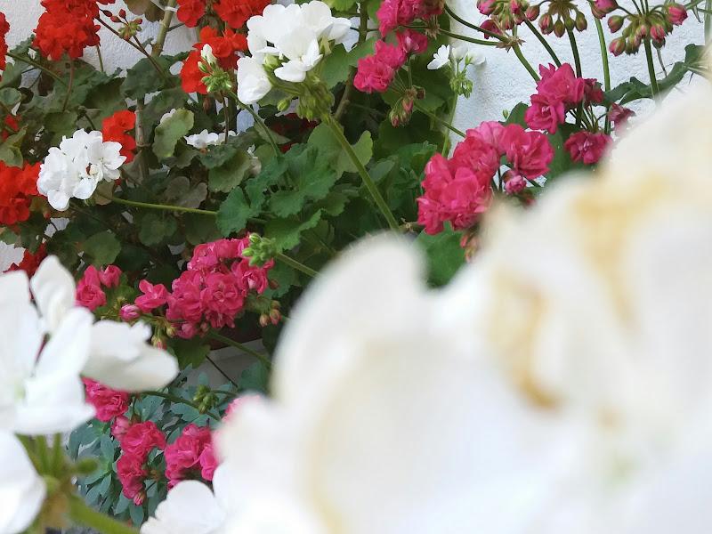 Grandma's flowers di anastasiaurru