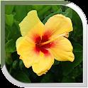 Hibiscus Live Wallpaper icon
