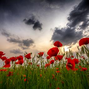 Twilight longings by Adrian Urbanek - Flowers Flowers in the Wild