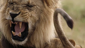 Mother of Lions thumbnail