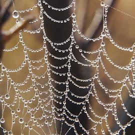 Drops on spyderweb by Ólafur Ingi Ólafsson - Nature Up Close Webs ( water, pure, chain, withe, drops, web, spyder, photo, black, , spiderweb )