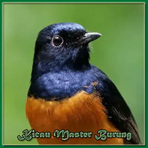Master Birdsong