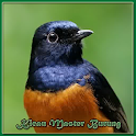 Master Birdsong icon