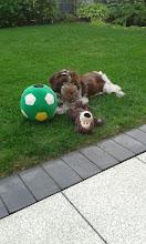 Photo: Spielzeug muss immer im Garten gehortet werden
