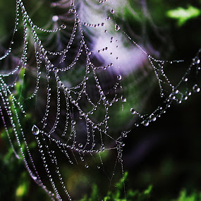 by RichandCheryl Shaffer - Nature Up Close Webs