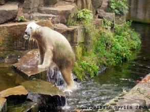 Photo: Knut hat die Nuss aus dem Wasser gefischt ;-)