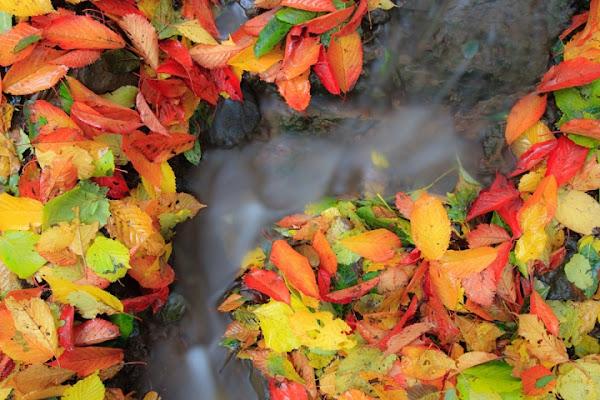 L' autunno che scorre di emmeerre
