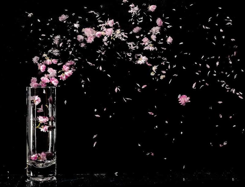 Sinfonia di petali di Marlak