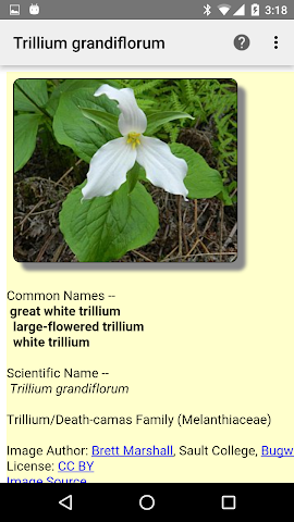 android Ontario Wildflowers Screenshot 2