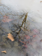 Photo: Reflection of a tree in a pond with ice and fallen leaves at Eastwood Park in Dayton, Ohio.