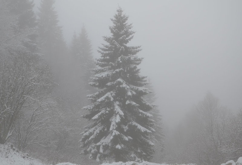Sogni d'inverno... di Julia Leonte