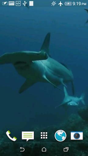 Shark 3D Video Live Wallpaper