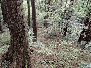 林道終点から尾根道に