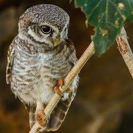 by S Balaji - Animals Birds