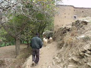 Photo: Having a look around the village.