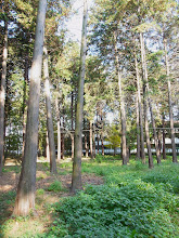 Photo: 都営住宅前の雑木林。明るく、適度に人の手が入っている。