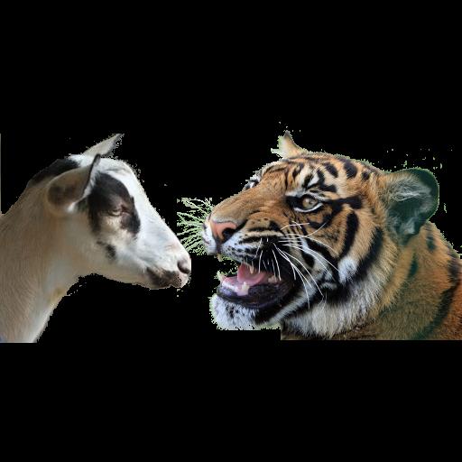 Bagh-Bakri (Tiger-Goat) - Apps on Google Play