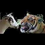 Bagh-Bakri (Tiger-Goat)