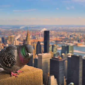 The best view  by Dejan Gavrilovic - Animals Birds ( empire state building high 5th ave, New York,  )