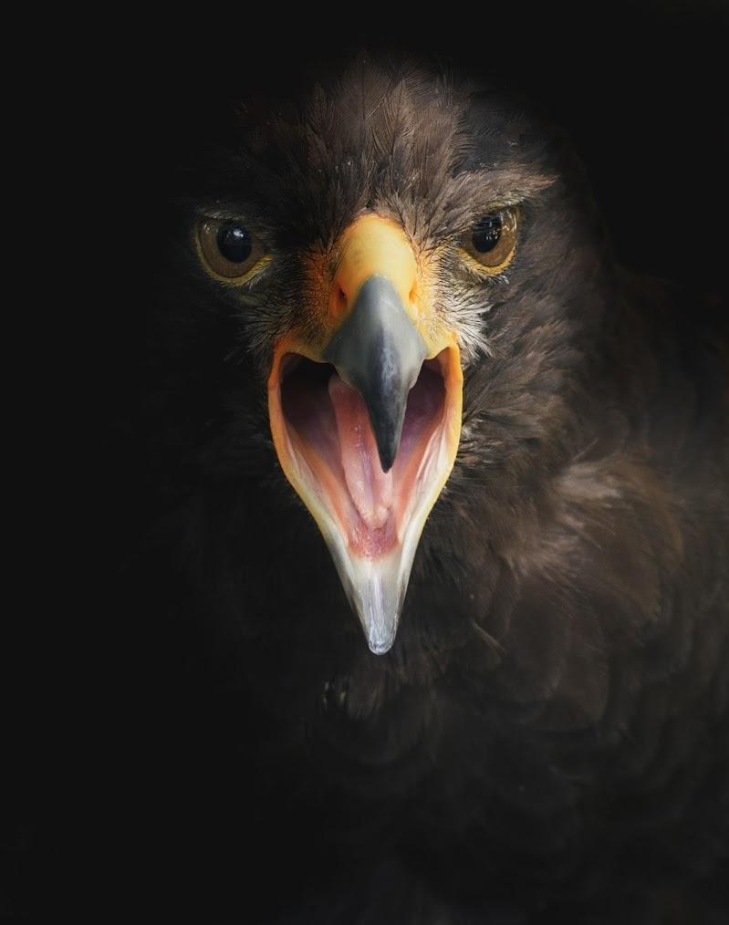 Eagle di Matteo Masini