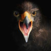 Eagle di