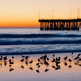 Venice Pier  by John CHIMON - Travel Locations Landmarks ( pwclandmarks )