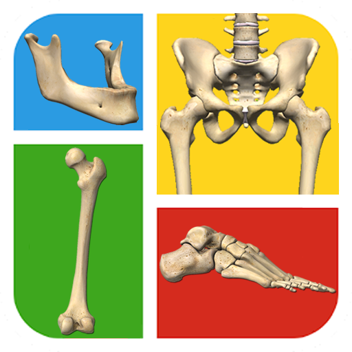 Baixar Quiz Ossos do Corpo Humano para Android