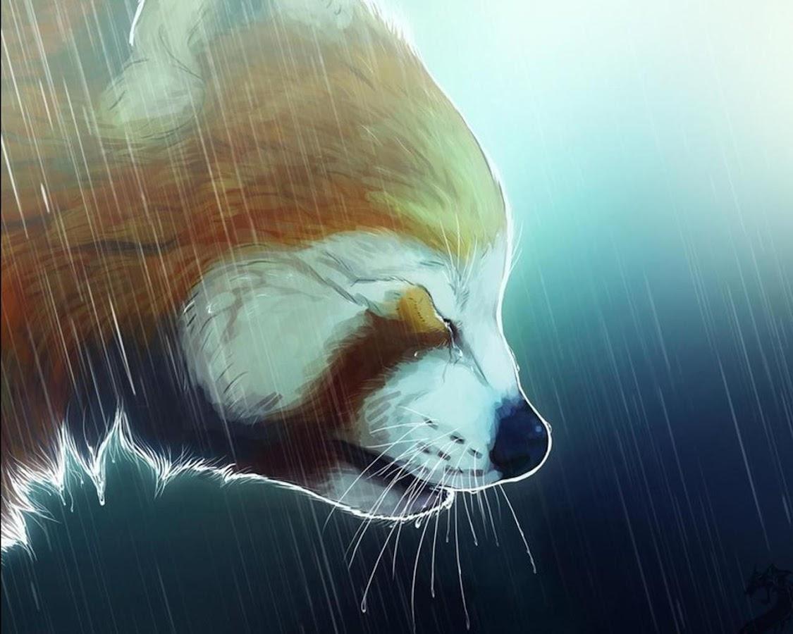 Gmail panda theme - Red Panda Anime Wallpapers Screenshot