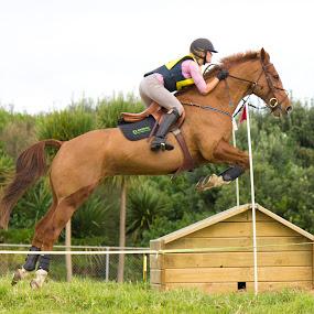 by Jasmine Graham - Animals Horses