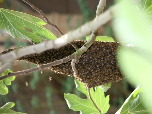 projet apiculture de l'ESAT des communautés de l'arche dans l'oise