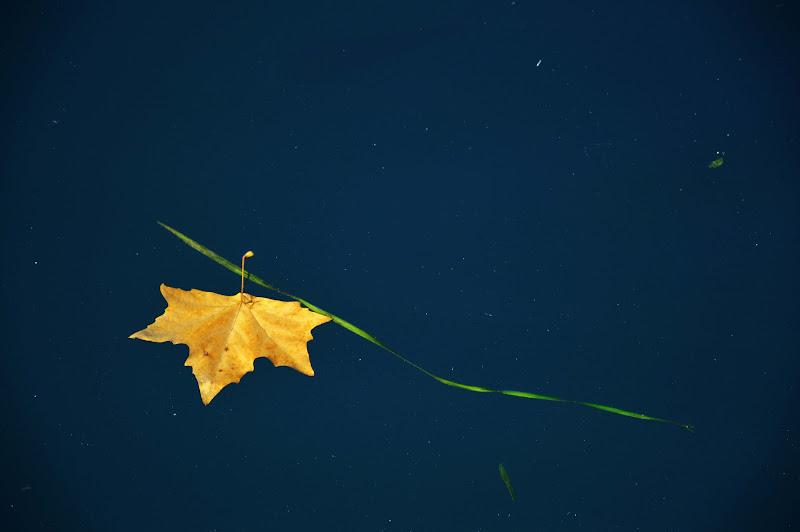 nell'acqua la prima foglia gialla di elisabetta_de_carli