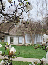 Photo: Gazebo by the lake framed by white magnolias at Cox Arboretum in Dayton, Ohio.