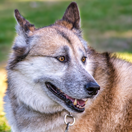 by Judy Rosanno - Animals - Dogs Portraits ( texas photography school )