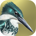 iBird Lite Free Guide to Birds icon