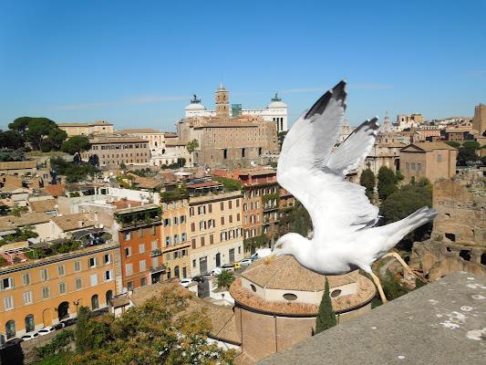 In volo sul Foro di Roma di Agocentrico