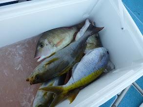 Photo: ワタナベさんの釣果! おっ、ウメイロがきてます。