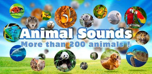 Приложения в Google Play – Animal Sounds & Pictures Free