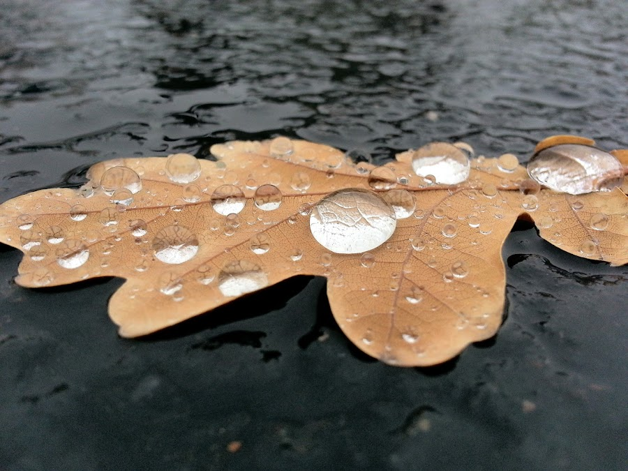 Magnifi-leaf by Rebecca Foxx - Instagram & Mobile Android ( drops, leaf, magnified, rain )