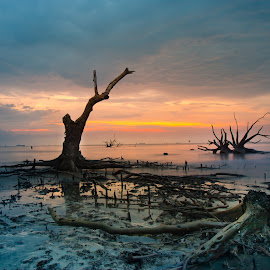 A peaceful sunset accompany by lonely tree trunks by CK Chong - Nature Up Close Trees & Bushes ( scenery taken during sea water on low tide )