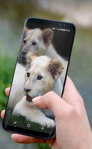 White Lion Wallpaper HD for PC