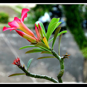 by Rahayu Fipro - Flowers Single Flower