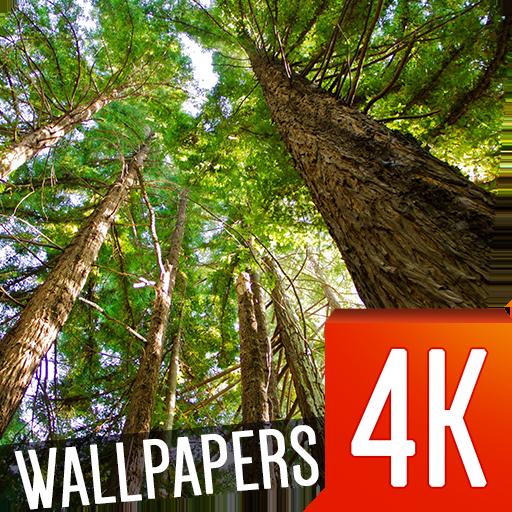 森林壁纸4K 個人化 App LOGO-APP試玩