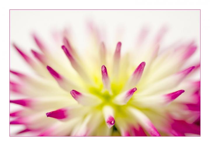 Uno strano fiore di soraya