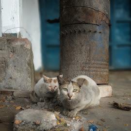 Reflextion by Tanvir Ornab - Animals - Cats Portraits