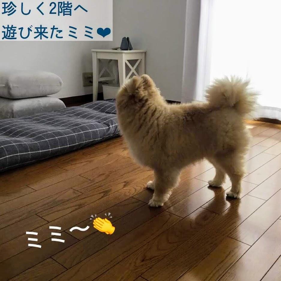 犬がそっぽを向いている