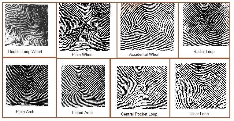 Forensics: Types of Fingerprints